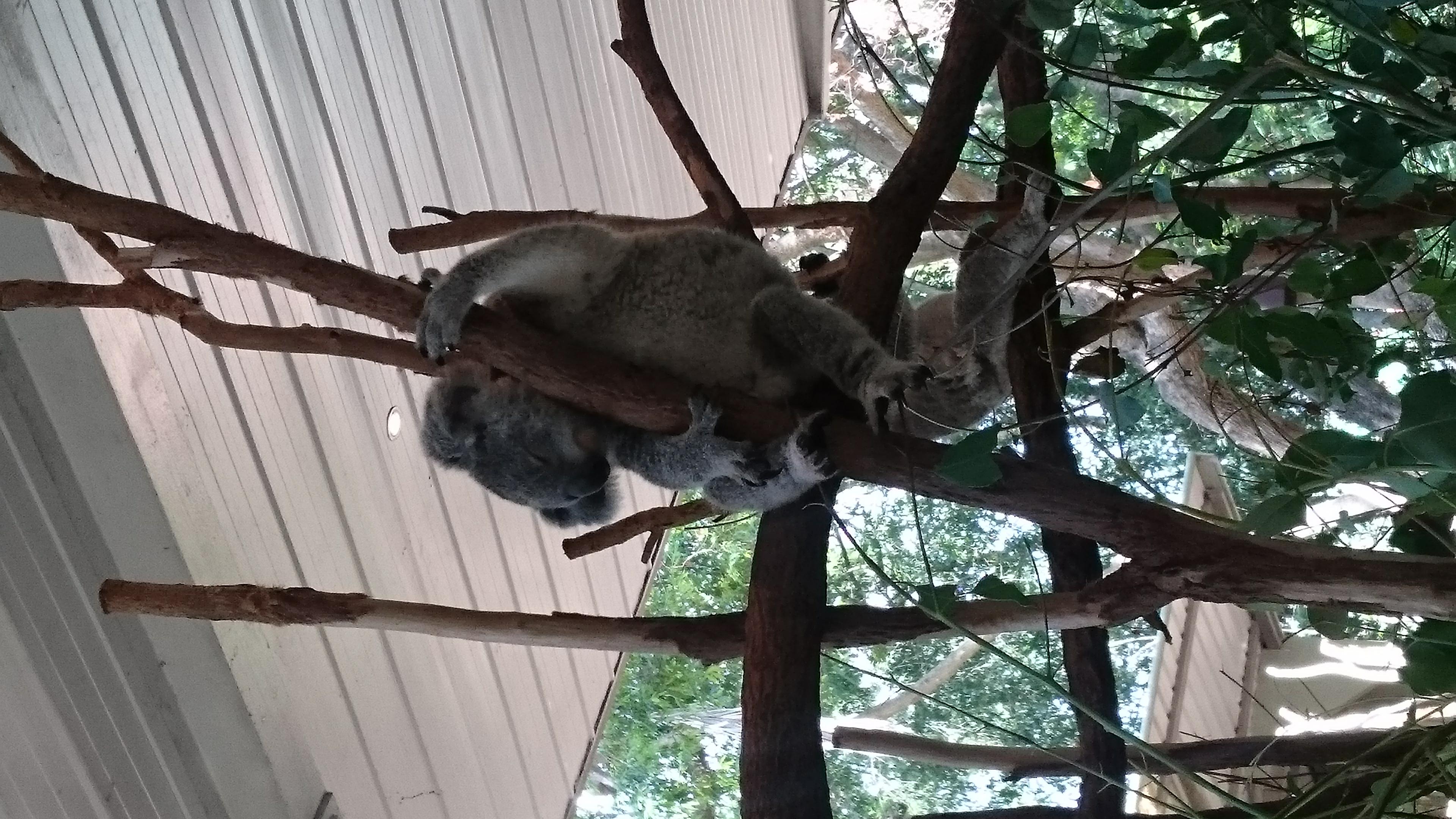 日本の野生動物 - 動物たちの楽園紀行