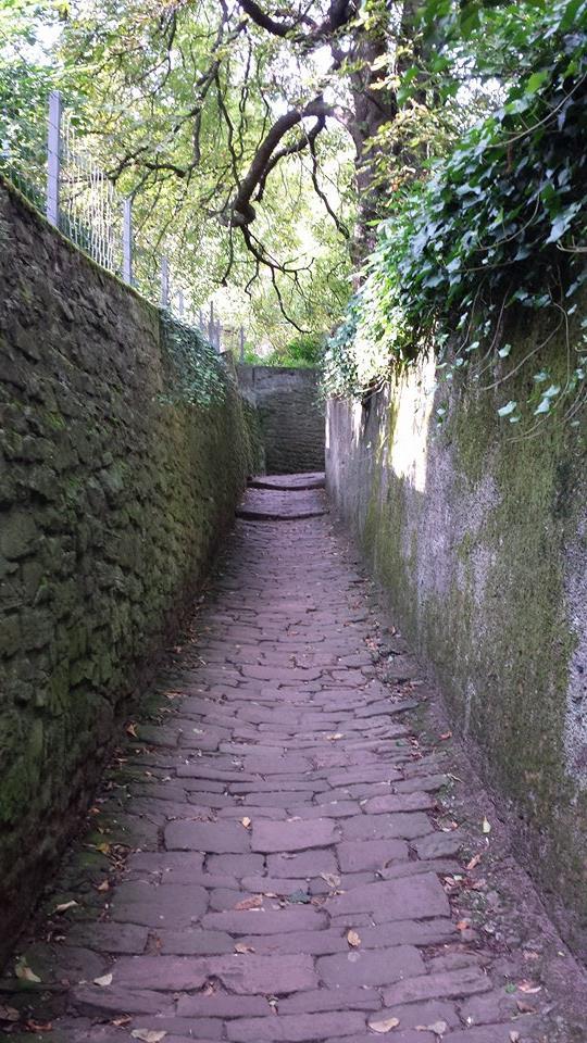 哲学の道_1